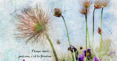 Create your own Background - NBK Design - Clin d'oeil Design