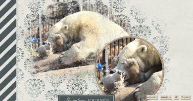 Nanuq le nouveau venu du zoo de Mulhouse