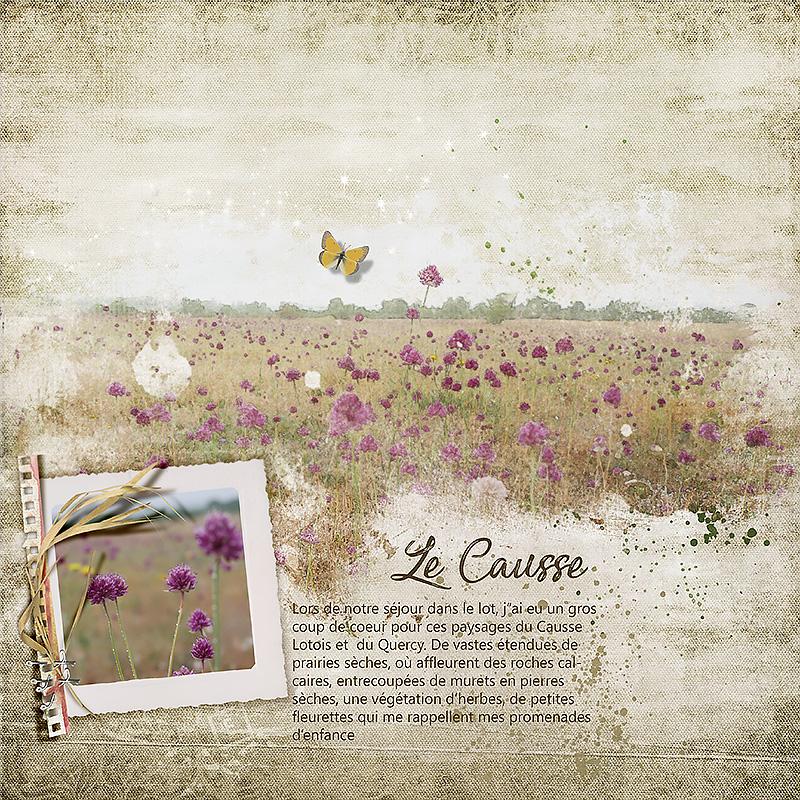 Un champ de fleurs sur le Causse
