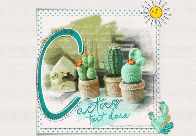 Des cactus tout doux