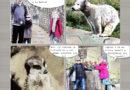 Balade au zoo effet comics