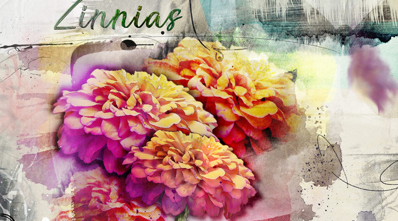 Zinnias - Anna Color challenge
